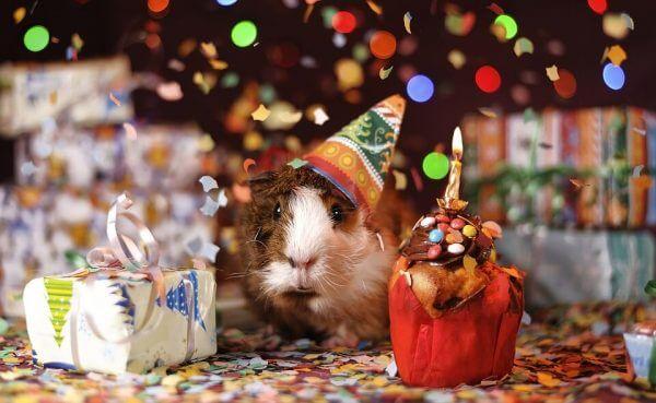 Ảnh chúc mừng sinh nhật hài
