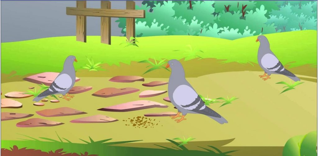 Chuyện kể thứ 8- Người thợ săn và những chú chim bồ câu