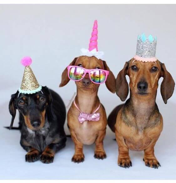 Những hình ảnh hài hước chúc mừng sinh nhật