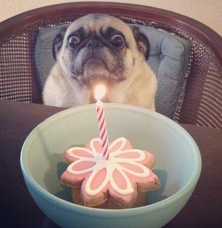 Hình ảnh vui về sinh nhật
