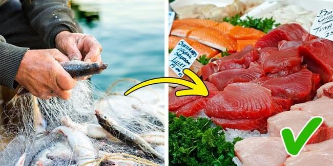 Cá nuôi không chứa nhiều chất dinh dưỡng bằng cá ở ao hồ