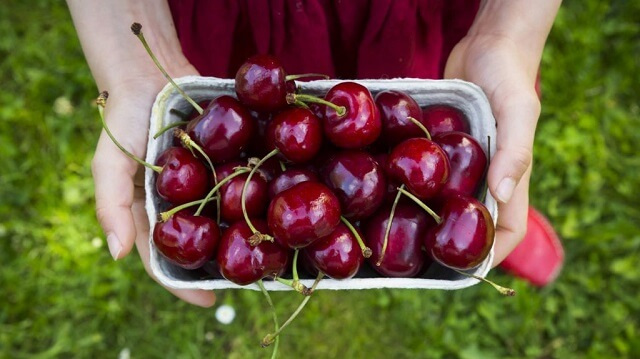 Dưỡng chất tuyệt vời từ cherry Mỹ