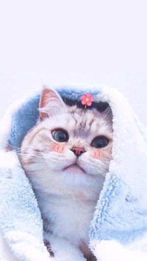 Bé mèo siêu đẹp và dễ thương cho điện thoại