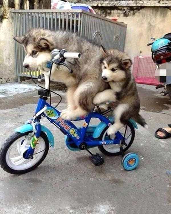 Tải hình ngộ nghĩnh về 2 chú chó con dễ thương