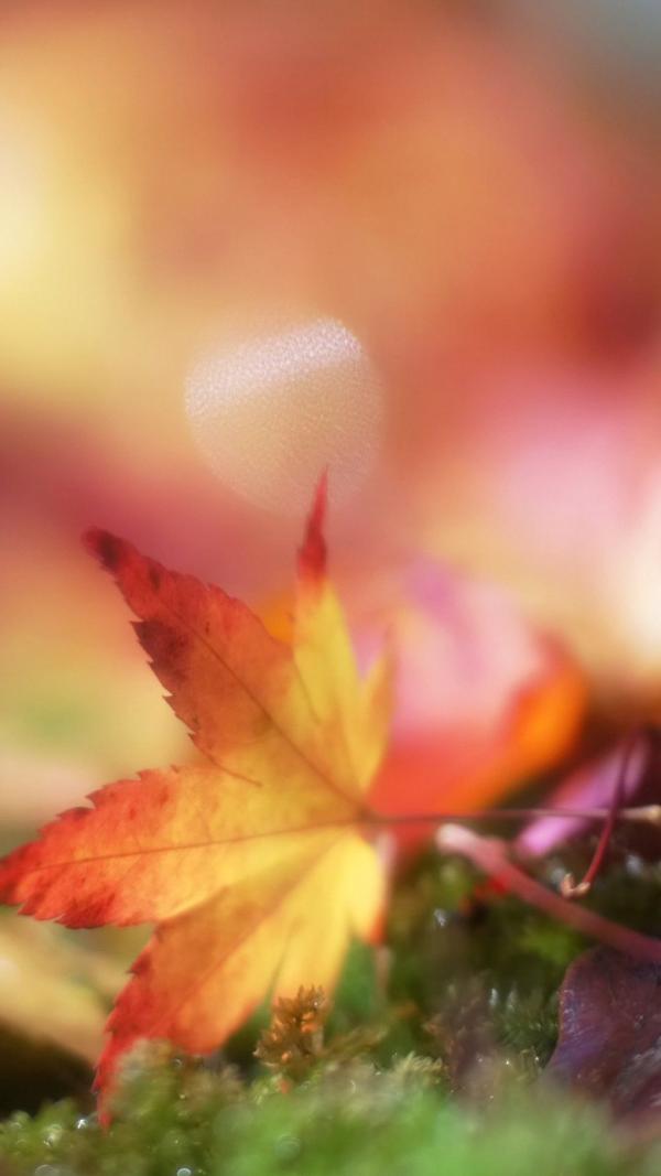 Hình ảnh vẻ đẹp của thiên nhiên chiếc lá mùa thu