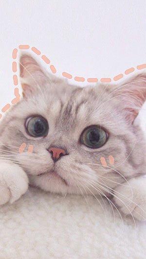 Hình nền đt đẹp về bé mèo dễ thương