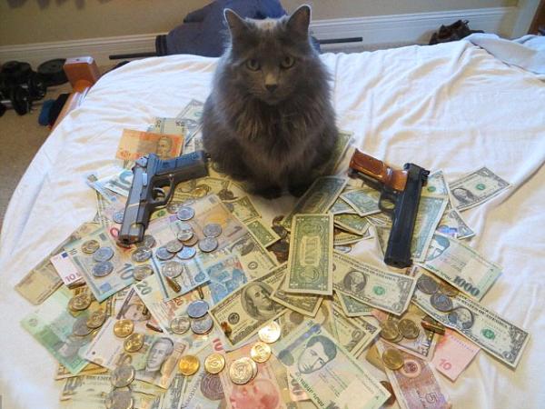 Ảnh vui ngộ nghĩnh về rich mèo