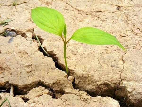 Bón phân không hợp lý gây thoái hóa đất và giảm sự phát triển của cây
