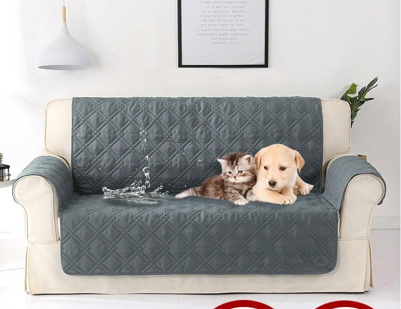 Hướng dẫn cách khử sạch mùi hôi của chó mèo trên ghế sofa