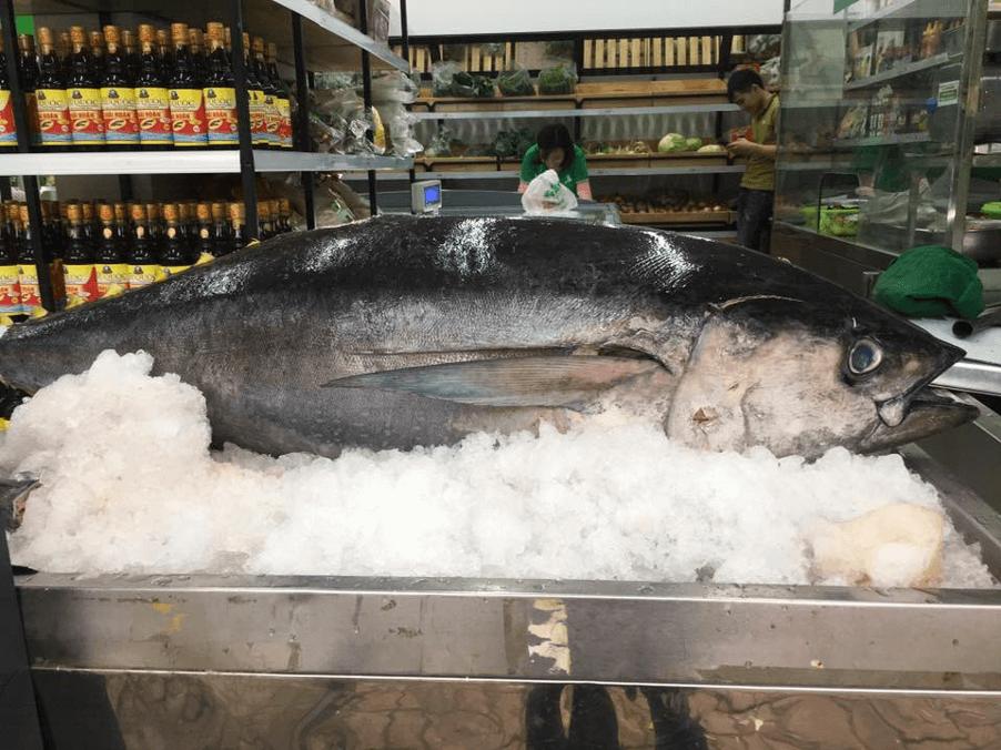 Cách bảo quản cá ngừ đại dương giúp cá luôn tươi ngon, giàu dinh dưỡng