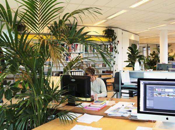 Cây cảnh văn phòng giúp xanh mát và bắt mắt