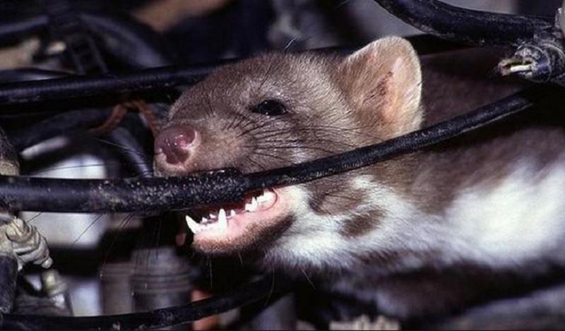 Mơ thấy chuột cắn nghĩa là gì?