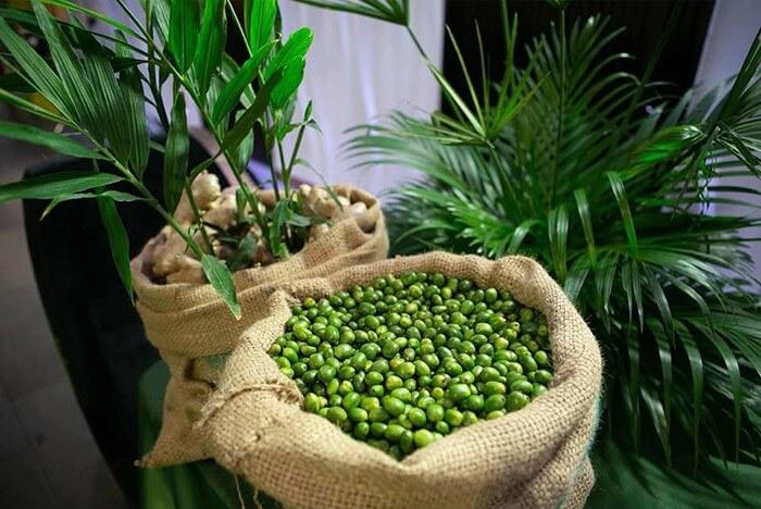 Hạt cà phê xanh giảm cân trên thị trường