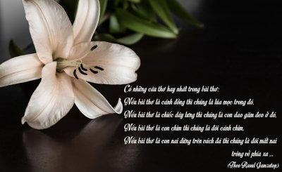 Tuyển tập những bài thơ hay nhất Việt Nam vừa cảm động
